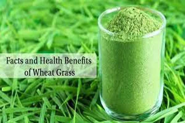 Facts And Health Benefits Of Wheatgrass